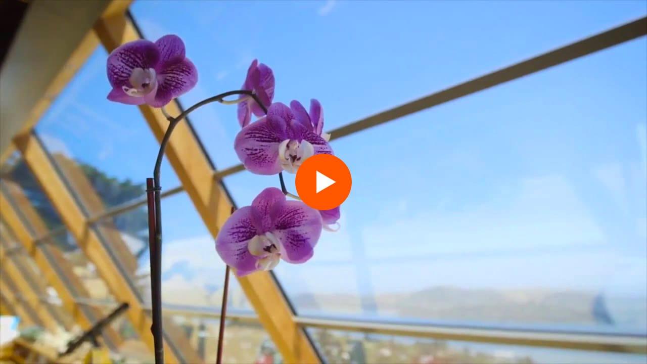 residential window film for homes in cincinnati, dayton, columbus, and covington